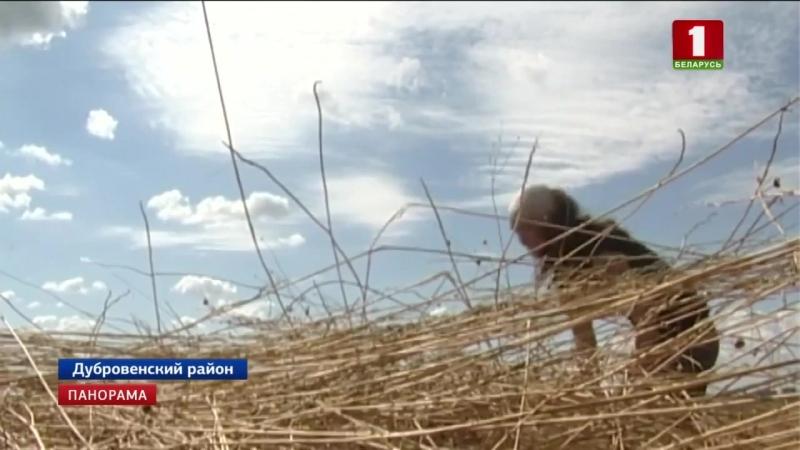 Помощь аграриям оказывает Федерация профсоюзов Беларуси Панорама