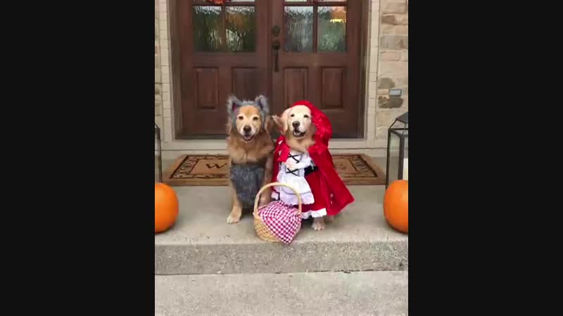 Little Red Riding Hood and the Heckin Bad Wolf