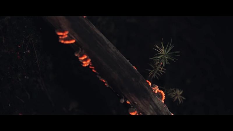 Дремучий лес Словно в сказке 1080p mp4