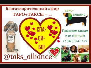 Юлия Жукова: Благотворительный Таро-стрим в пользу