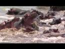 «Хищники Африки: Один в поле не воин» (Познавательный, природа, животные, 2015)