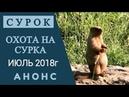Охота на сурка Июль 2018г Анонс