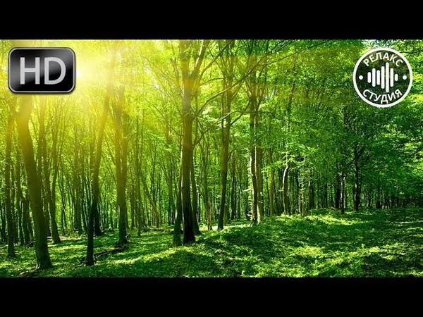Звуки Природы: шум леса, пение птиц. 3 часа для сна и снятия стресса