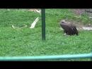 Зоопарк Лимпопо. Грифы и Сипы