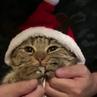 Santa Paws coub
