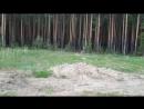 Идол в Сибирских лесах