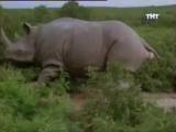 Носорог(из фильма эйс вентура 2)