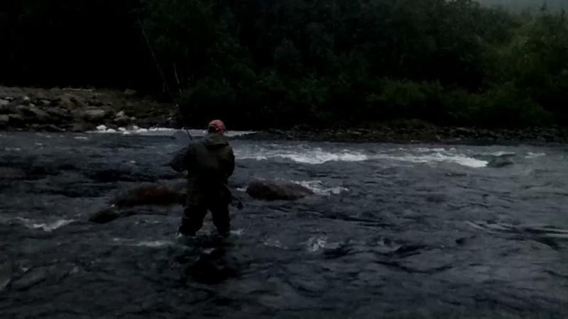 Сёмга 12 килограмм на Спиннинг за хвост King Salmon