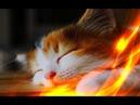 Позитив Смешные кошки Приколы про животных Создай себе хорошее настроение