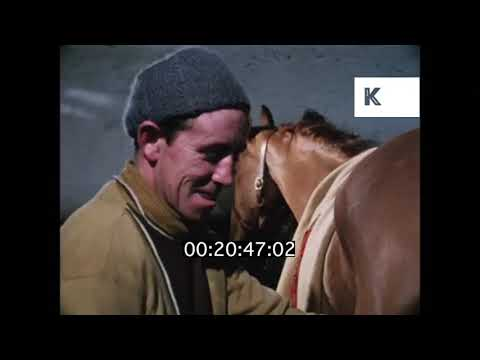 Horse Grooming, Race Horses in Stables, 1971, HD