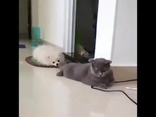 Как дружат кот с собакой