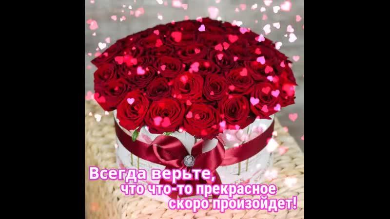 Doc198797416_508554581.mp4