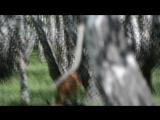 экскурсия нат страусиную ферму