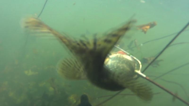 Подводная охота 2014-2015