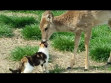 Cat and Whitetail Deer Bath