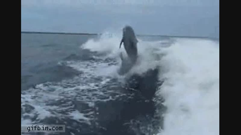 Dolphin crash