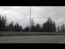 Мертвый лес Трасса возле Кукуштана. Строительство дороги убило лес.