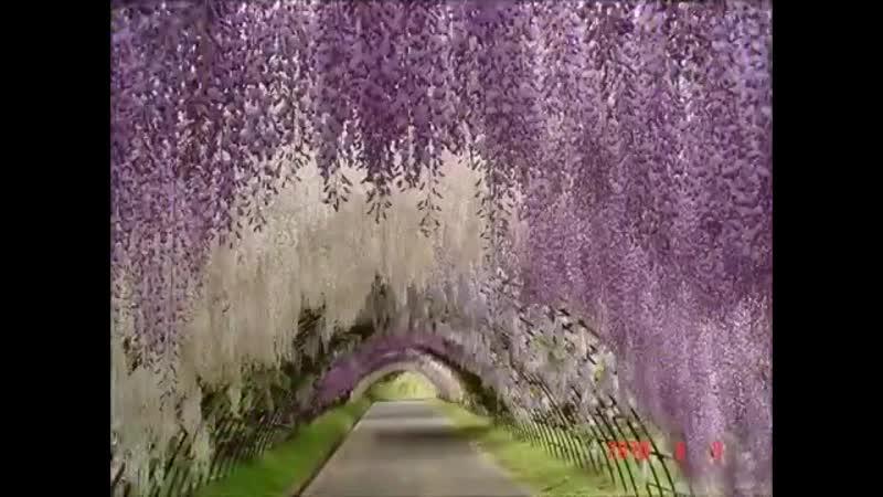 Красивая японская музыка (Beautiful Japanese music)