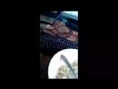 МОПС ДЯДЯ ПЁС, МАЛЫШ, ХОЧУ ПОЖРАТЬ, СТРИМ ВЕЧЕРНИЙ СТАРК 10/08/2018