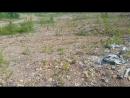 Прогулкапо шламполю ролик 27