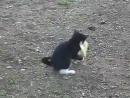 Котенок боерется с утенком!