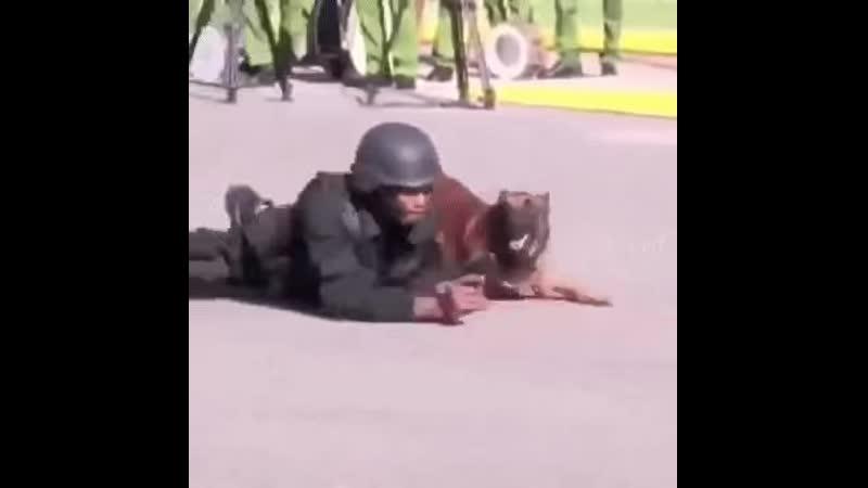 Тренировка стрелковых позиций с псом