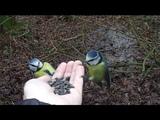 Me hand feeding wild birds again!