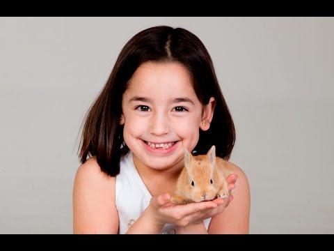 Кролики-как правильно держать кролика