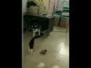 Коты - беспредельщики