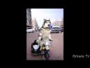 ПОПРОБУЙ НЕ ЗАСМЕЯТЬСЯ - Смешные Приколы с Животными до слез, смешные коты, funny cats .mp4