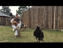 Eagle Fly Free Helloween Acoustic - Classical Fingerstyle guitar by Thomas Zwijsen