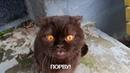 Коты и кошки говорят ч.2