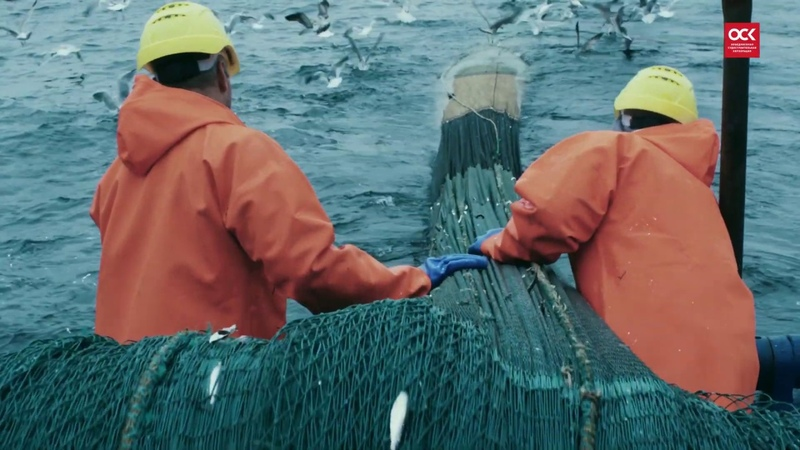 Строительство рыбопромыслового флота на верфях ОСК