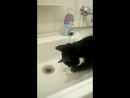 водные процедуры Фильки