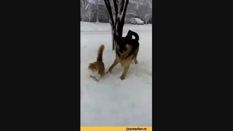 спервмым снегом