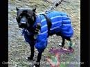 Комбинезон Happy Dog City тёплый для питбуль терьера