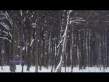 Поль Мориа - Падает снег Paul Mauriat - Tombe La Neige.mp4