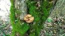 В лес за опятами октябрь 2018 Горячий ключ Краснодарский край