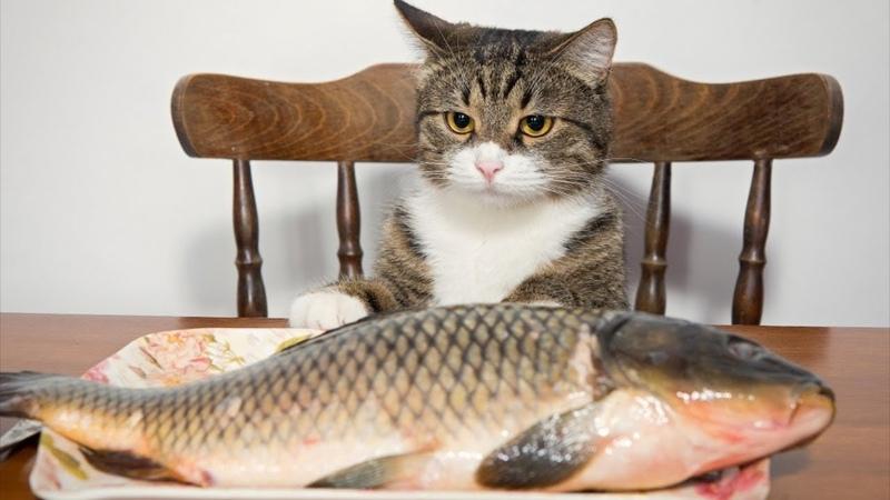 Я РЖАЛ ПОЛ ЧАСА. Смешные Коты и Собаки. ПРИКОЛЫ С ЖИВОТНЫМИ. 7