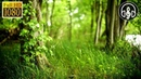 Незабываемое пение птиц в лесу. Успокаивающие голоса птиц для расслабления и снятия стресса 3 часа