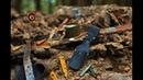 Коп по войне Блиндаж минус 11 Вlindage minus 11 Searching with Metal Detector