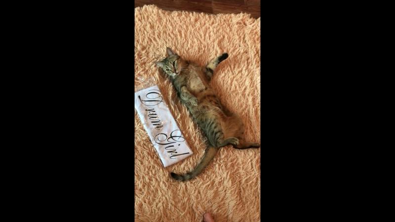 кот и футболка с ручной росписью
