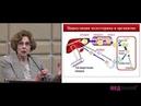 10 Обмен холестерина Семейные гиперхолестеринемии Доц Творогова Т М