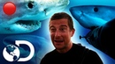 🔴Documentários sobre tubarões sem intervalos   Shark Week 2018   Discovery Brasil