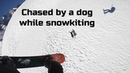 Chased by a dog while snowkiting