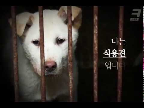 Индустрия собачьего мяса в Южной Корее. 죽어야만 나갈 수 있는 곳. 식용견농장⎢크랩