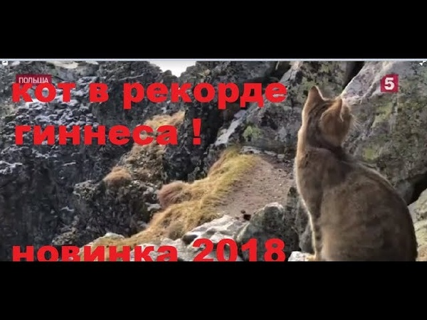 Умывающийся кот поджидал польских альпинистов высоко в горах 2018