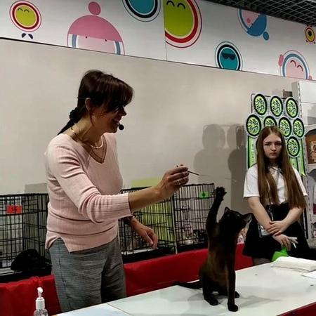 Burma_burshaly_cattery video