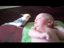 Попугай ПОЁТ для малыша
