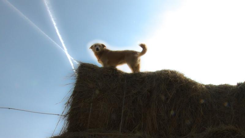 Все псы попадают в рай, или на кого повесили всех собак власти Волгограда
